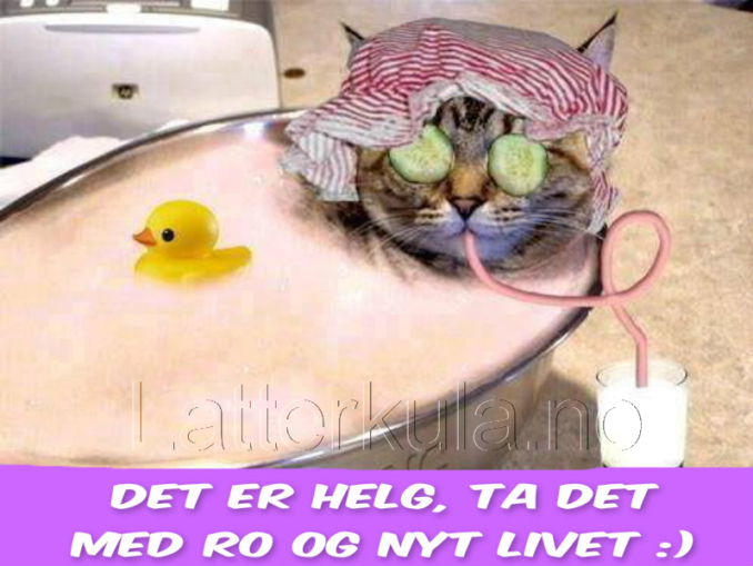 1835323463Helg-slapp-av-katt-spa-latterkula.no