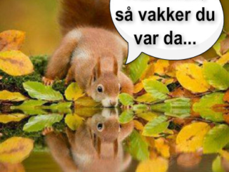 960903928Ekorn-vannspeil-latterkula.no
