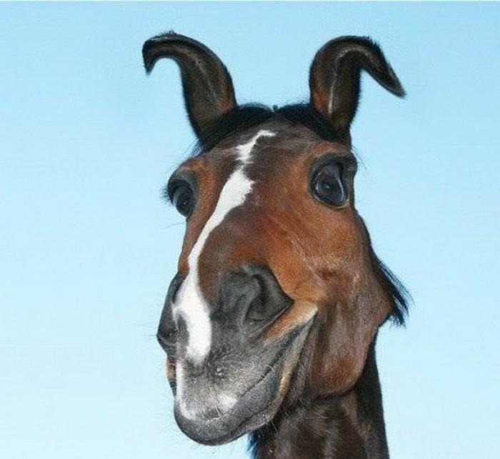 Прикольные картинки про коней